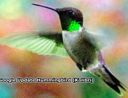 Google-Update Hummingbird (Kolibri) wird die Internetsuche verändern